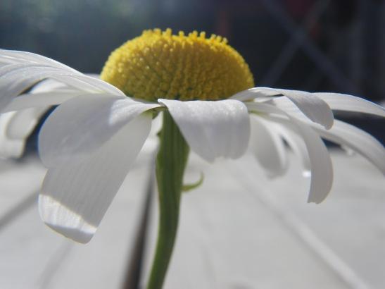 gleden i de små tingene, blomsten jeg klarer plukke