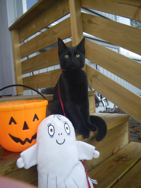 Katt, spøkelse og halloweenbøtte