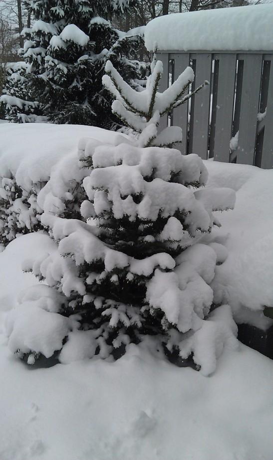Se på snøen som faller