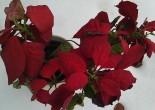 jula er definitivt over