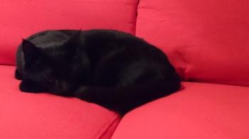Sofa som blør